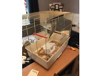 Budgie bird cage