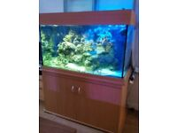 MARINE AQUARIUM setup with beach cabinet
