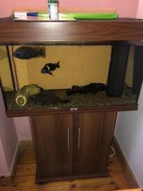 Juwel Fish tank & cabinet