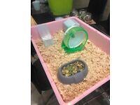 3 female mice plus large cage