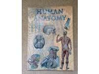 Large Human Anatomy Book