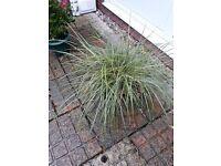 Grass plant in basket