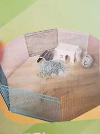 Hamster run or pygmy hedgehog run