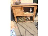 Male and female rabbit with hutch