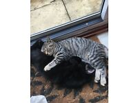 2 gorgeous female kittens 5 months old free to good home