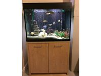 African Cichlids and Large fish tank & cabinet for sale