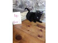 4 lovely kittens for sale