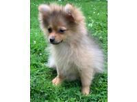 Beautiful baby girl puppy