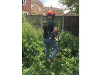 Gardening and Grounds maintenance / Driveways & patio cleaning