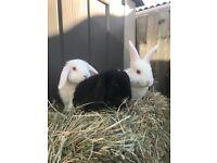 ❤️❣️3 lovely bunny boys ❣️❤️