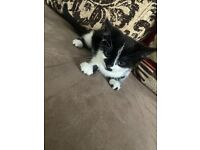 Kittens for Sale - 6 Months - Brother and Sister