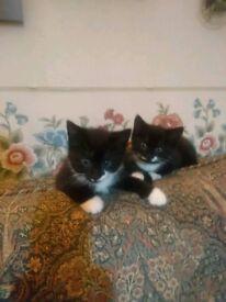 Very cute kittens