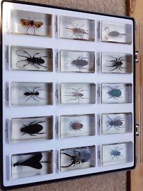 15 Real life bugs in resin