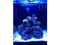 Marine Aquarium Full set up & Live stock