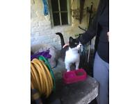 Cat (great mouser), needs new home.