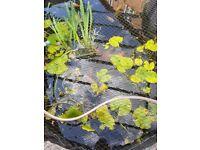Fish pond set