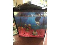Fish tank , pump & filter and 3 free gold fish !!