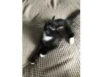 Only 2 available out 6 kittens for loving homes