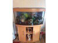 Juwell Rio 180 curve fish tank
