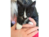 5 gorgeous kittens,smart and playful,litter trained,looking for a loving family :-)