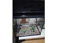 15 x 15 x 12 tropical tank/aquarium/fish tank