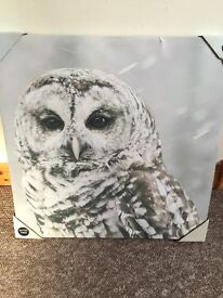NEW Owl glitter finish canvas