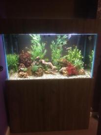 310 litre aquarium