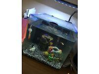 Tropical fish tank and 4 fish