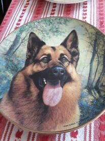 Collection of German Shepherd plates by Danbury Mint