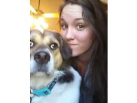 American Student with Dog needing a roomshare!