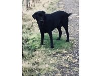 Walk That Dog Dog Walking Services for Ripley Surrey and Guildford, Woking Areas