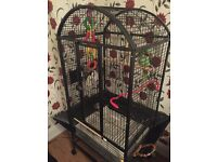 Alexandrine parrot with large cage toys food and more