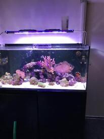 Redsea reefer 350 full set up
