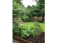Gardening, design, landscaping and maintenance services