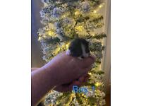 Kittens for sale - All Now Reserved