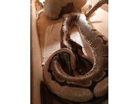 Spider python