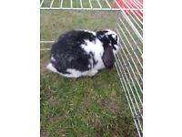 Small/medium bunny looking for forever home