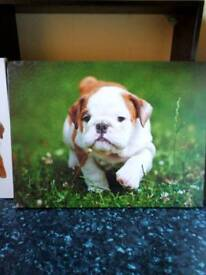 SMALL DOG CANVAS PICTURES