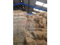 HAY FOR SALE - SMALL CONVENTIONAL BALES