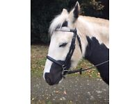 13.1hh Gorgeous Bombproof Mare 8 Years