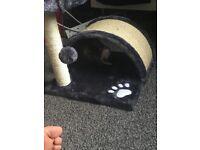 8 weeks old female kitten