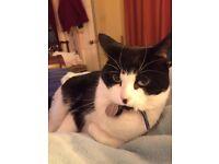 REWARD OF £500 - Small black and white cat lost in TN15