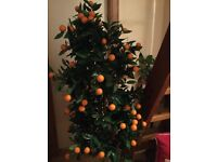 Orange Tree- Great for Home, Hotels, functions, Office, Shops, Communal Spaces etc