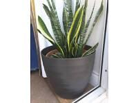 Black/Grey Antrazit Ceramic indoor plant pot: Diameter 33cm, Height 30cm.