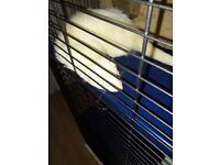 Albeano ferret and tall 3 level cage selling due to not having time for him anymore he is 2yrs old