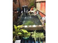 Large fish pond full set up