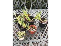 Aloe Vera and Suculents formSale