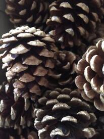 Devon pine cones for Crafters pop puri Xmas wreath