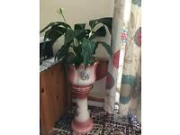 Ceramic plant pot and stand