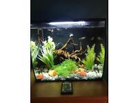 Fluval flex fish tank 34L